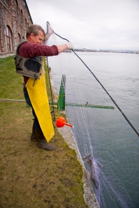 LSSU Aquatic Research Laboratory manager Roger Greil retrieves a gill net used to collect pre-spawned Atlantic salmon from the St. Marys River. Photo Courtesy of MDNR