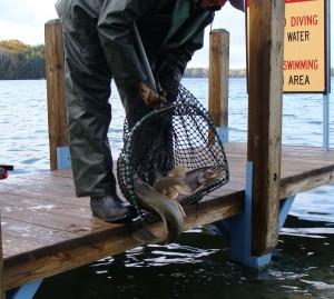 FisheriesStocking