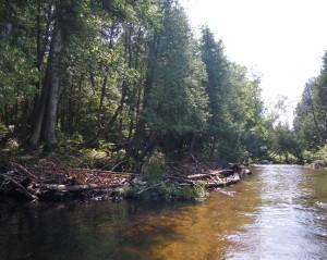 In-stream habitat improvement