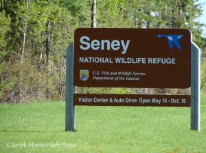 Seney sign