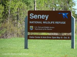Seney sign