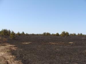 Danaher Plains After Prescribed Burn